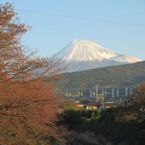 皆さんお早うございます。今朝の冠雪富士山