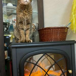 電気式薪ストーブと猫ちゃん
