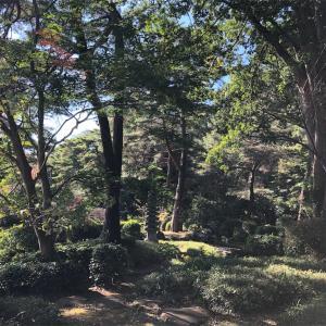 往復4kmの参道を完歩!さいたま市大宮区 氷川神社へ