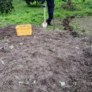ナギナタガヤの種を蒔きました