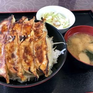 【かさご餃子】意外にいけるぞ!ご飯の上に餃子がのった浜松餃子丼!!