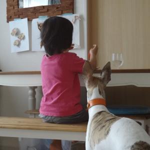 いつもの朝のひと時。ウィペットと遊ぶ
