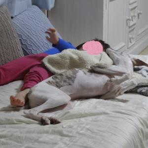 あったか毛布の寝床でおやすみなさい