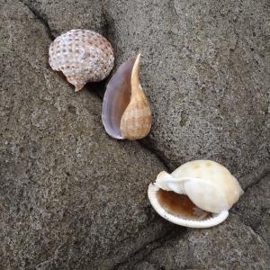 牛臥山公園の朝、わんこと一緒に貝探し(沼津市)