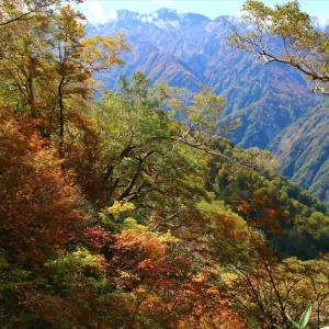 白山紅葉最前線 中宮道(滝ヶ岳~ゴマ平)