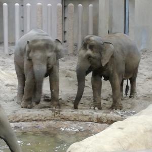 私が動物園に行く理由