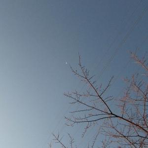 気持よすぎる雲ひとつない朝