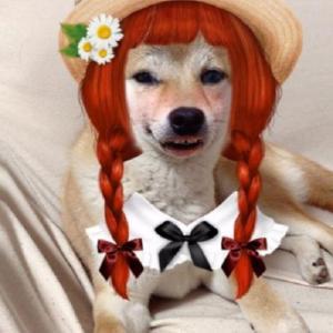 赤毛のワン