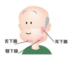 唾液腺のマッサージ|高齢者になると唾液の分泌量が減っちゃうんだよ!