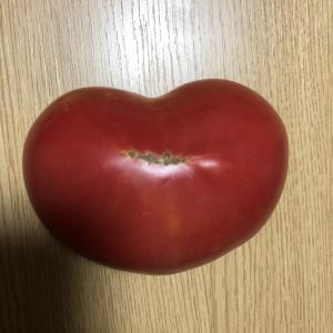 ハートのトマト発見🍅