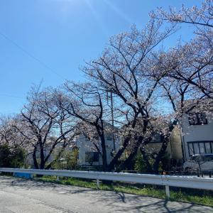 春と共にステキなゲスト♡