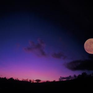 満月のエネルギーを活用しよう♡