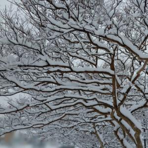 昨夜は「デパス(エチゾラム)」情報で大荒れ 今日はドカ雪の中の通院