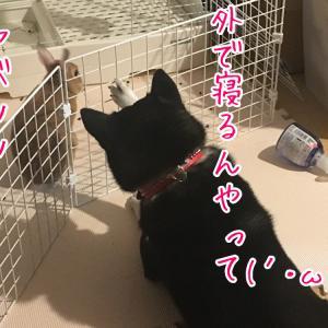 女一人と犬一匹で初めてのソロキャンプヾ(≧▽≦)ノ その1