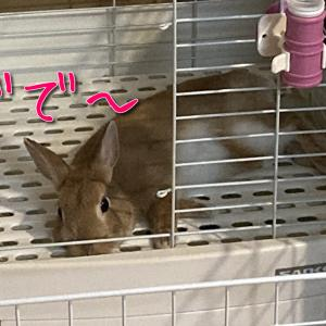 夏バテ予防!ゴーヤを食べよう!\(^o^)/