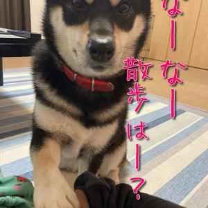 青椒肉絲が食べたいんじゃ!( ˘•ω•˘ )