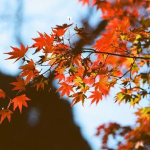 【東京・原宿&代々木】秋は「代々木公園」で紅葉を楽しみましょう♪