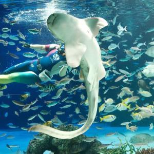 【東京・池袋】 都会の中のオアシス!涼を感じられる「サンシャイン水族館」へ行ってみよう♪