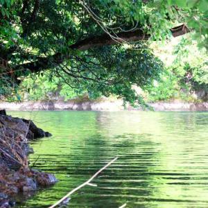 【神奈川・相模原】 相模湖畔でバーベキュー・コテージ泊・絶景が同時に楽しめる!!! 「日相園」へ行ってみよう♪