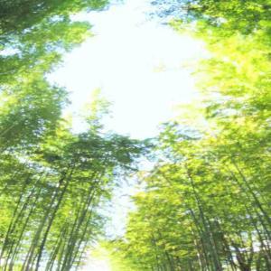 【静岡・修善寺】 「逃げ恥」ファンも殺到⁉ ロケでも使われた伊豆箱根鉄道に乗って竹林を満喫しよう♪