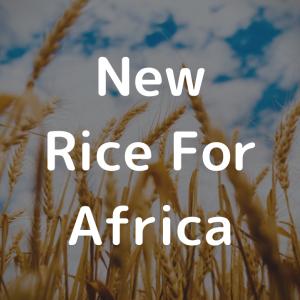 【ネリカ米】アフリカの希望とも称されるネリカ米って何?