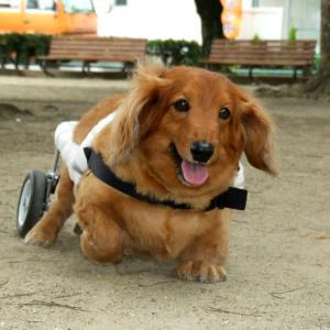 「クリスマス・ソング」障害犬バロンの動画