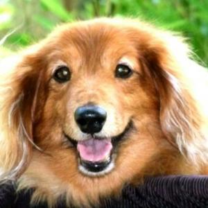 その2. 虹の橋「犬と縁の無いも同士」 障害犬バロンの気持ちになって