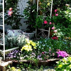 植津庭園の薔薇の花はこれからが見頃