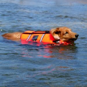 障害犬バロンの海水浴写真集の動画を掲載