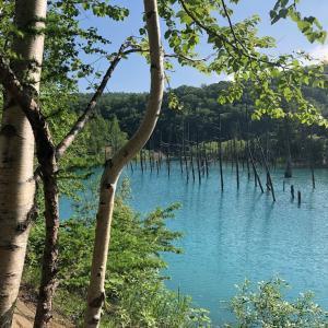 美瑛「青い池」の美しさとトイレの話