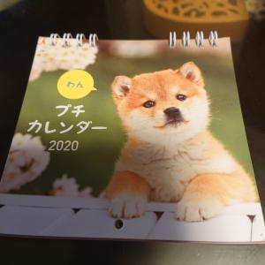 柴犬のカレンダー★