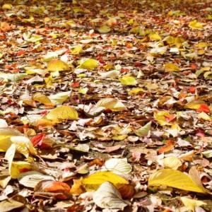 立冬・11月8日