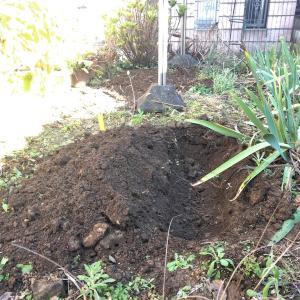 生ゴミ堆肥化実験 その10
