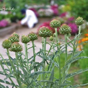 植物園の木や花 2020.5.22
