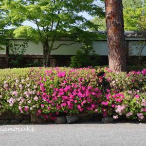 蹴上と美術館庭そして永観堂  2021.4.21