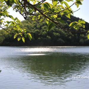宝ヶ池 水辺の写真 2021.4.22