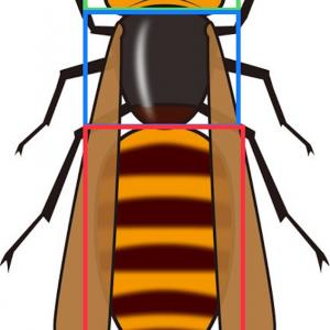 昆虫の定義と繁栄の秘密