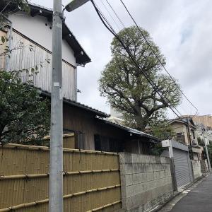 柳沢家&前田侯爵邸の見学(2019/11/3)