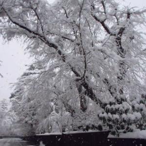 雪の武家屋敷どおり