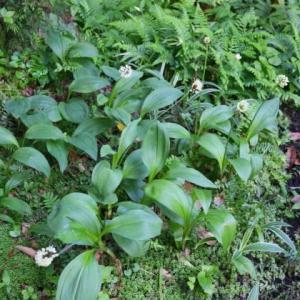 ニンニクの花と‥‥