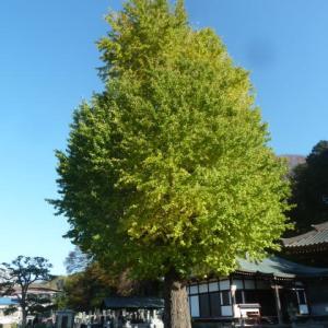 '20 黄葉をたずねて/う~んイマイチだった(涙・・ついでに富士見塚まで!