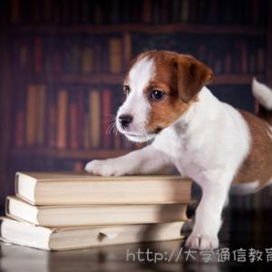 【神奈川】司書講習・司書補講習を実施している大学。社会人・主婦・大学生におすすめはココ!