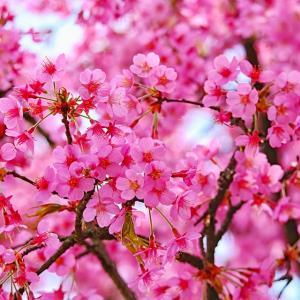 【ずぼら養生】漢方的・春の過ごし方 花粉症対策など【漢方養生指導士】