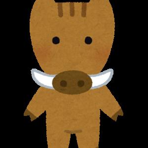 美味しい猪肉の条件