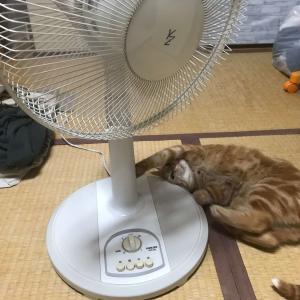 猫は扇風機が好きみたいです、カバーが必要かしら?