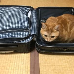 猫のどこにも行かないでアピールinスーツケースが可愛すぎる件について