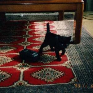 黒猫びより