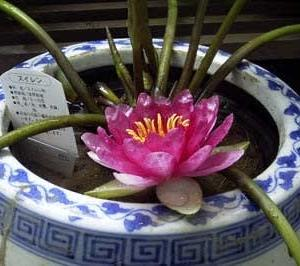 火鉢に咲く花