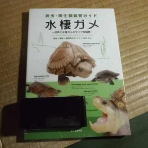 ニオイガメ・ドロガメの医食住の読書感想