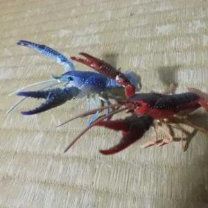 チョコQ・アメリカザリガニ赤と青(海洋堂製)